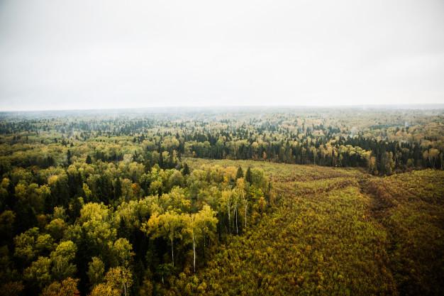 overblik over skov